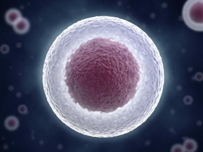 O nouă moleculă permite celulelor stem din cordonul ombilical să se multiplice