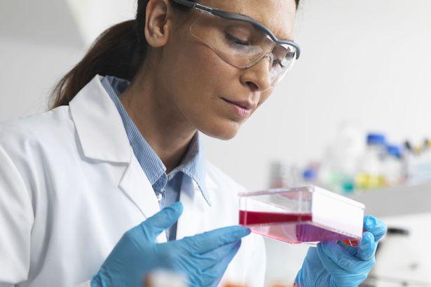"""5 întrebări """"cheie"""" despre procesul de recoltare al celulelor stem"""