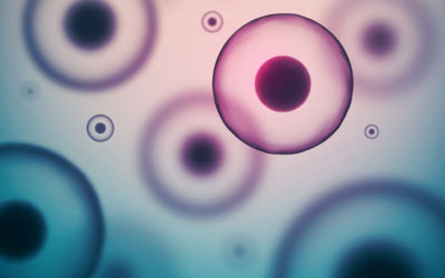 Transplant autolog sau alogen: tipurile de transplant celule stem și diferențele de viabilitate și compatibilitate