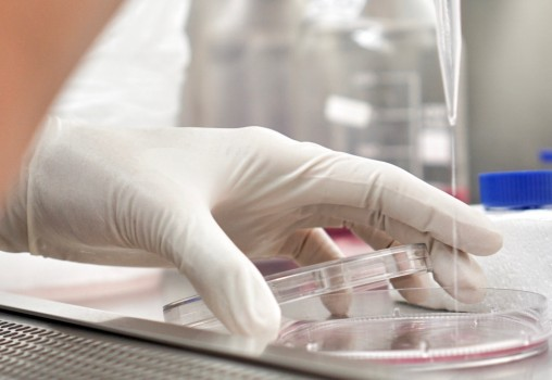 Update transplant celule stem: Cercetătorii de la Universitatea din Luxemburg au descoperit un model de regenerare a celulelor stem ce poate sta la baza unor viitoare tratamente