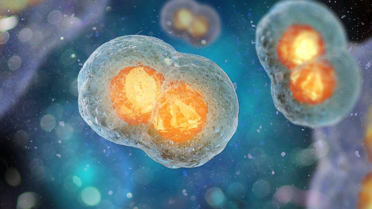 formarea embrionului